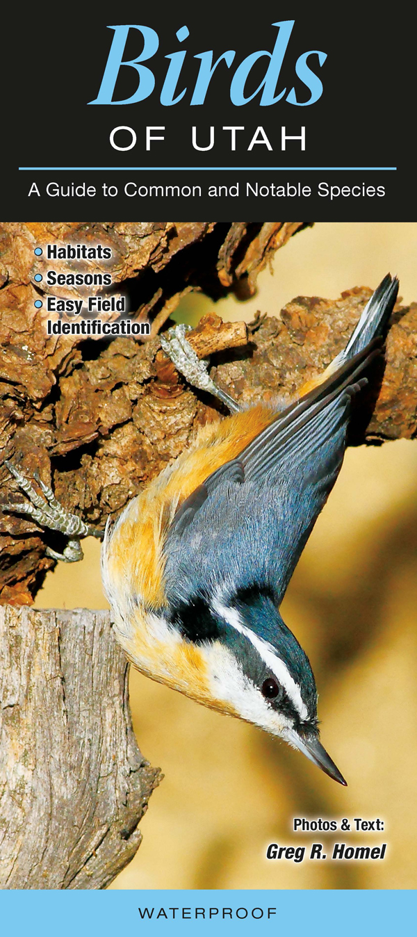 Birds of Utah (Common and Notable Species) Quick Reference Guides